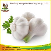 china wholesale nature garlic price