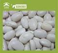 prix de gros 214gsm haricot blanc