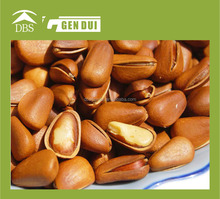 pine nut wild pine nuts high nutritional value dry fruit pine nut