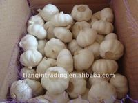 natural fresh garlic for sale