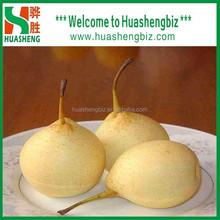 Fresh shandong pear wholesale/ China fresh Ya Pear for exporting