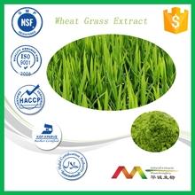 GMP&ISO Manufacturer Wheat Grass Powder or White Grass Juice Powder