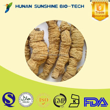 Best quality of Radix moridae officinalls dried root in China