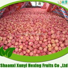 India apples exporter custard apple fruit