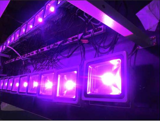 hei er verkauf 30w led wachsen licht f hrte pflanze wachsen licht led scheinwerfer gew chshaus. Black Bedroom Furniture Sets. Home Design Ideas