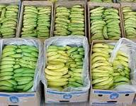 TROPICAL BANANA Now in TURKEY