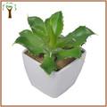 Tabela decorativa mini suculenta planta venda quente no exterior