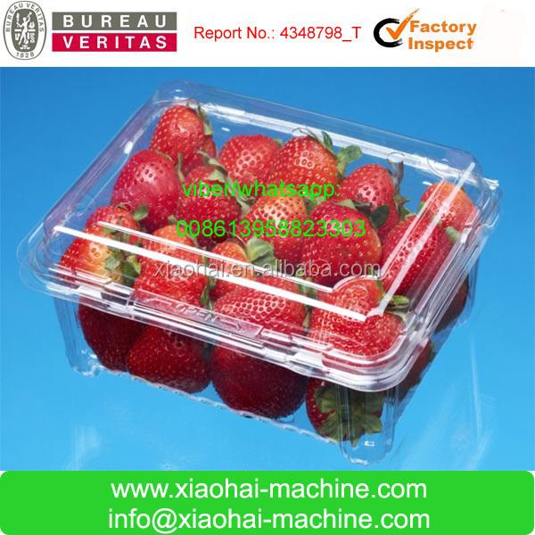 fruit tray making making machine.jpg