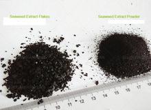 Eco- ambiente 15% del ácido algínico extracto de algas marinas