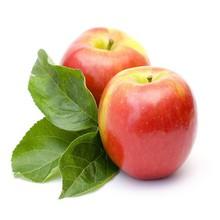 nectar fruit apple juice wholesale