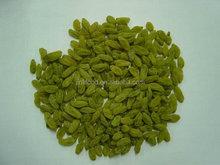2014 Xinjiang Red /Sultana Gold/Golden Green Fruit / Vegetable / Dried Snacks jumbo/medium/small/standard Raisins lasted Price