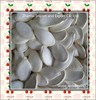 wholesale snow white pumpkin seeds