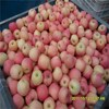 2014 New Chinese Fresh Red Fuji Apple