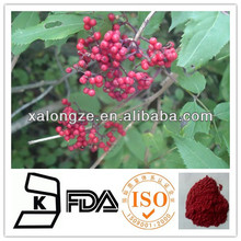 Pure and Natural Elderberry Sambucus nigra Powder Extract Widely Used in Healthcare Supplement Feild