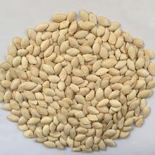 2015 Inner Mongolia Pumpkin Seeds