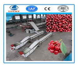 Wholesale Cherry Tomato Sorting Machine