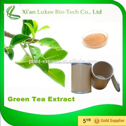 Powder Form and Leaf Part green tea extract