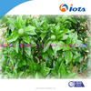 Wetting and Dispersing Agents IOTA-2000-30
