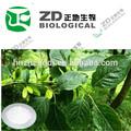 Corteza eucommiae/eucommia extracto de corteza de/eucommia extracto de ácido clorogénico