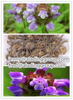 Gmp Factory Supply Best Price Selfheal Spike Extract/spica Prunellae Extract Prunellin