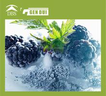 China export organic frozen blackberry
