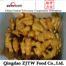 Ginger Price In China ; Export To Dubai Fresh Young Ginger