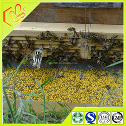 wholesale bee feed 100% natrual mixed rape bee pollen of animal feed from china bee pollen supplier