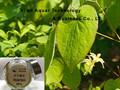 sexuelle stimulanzien epimedium brevicornum Potenz