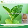 La prevención del cáncer de los productos de té verde polifenoles de extracción de polvo 50%- 98%