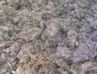 agriculture cow dung manure
