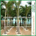 Al aire libre de palma tropicales plantas de árboles ( wodyetia bifurcata )
