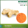 Extract Chinese Supply Rhizoma curcumae longae extract Specification 10% 20% 95% 98% Curcumin