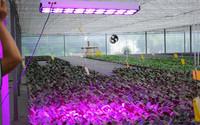 appllo 10 full spectrum led grow lights equal 1000w hps led grow light 500w led grow light manufacturer