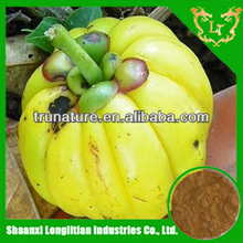 High qiality garcinia cambogia powder extract easy absorb from ISO factory