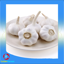 Fresh Red Garlic 5.0CM, Normal White Garlic With Mesh Bag, Super White Garlic For Export