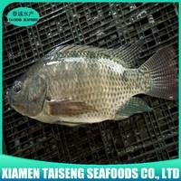 Farm raised whole fish tilapia