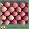 Fresh fuji Apple Fruit price