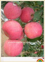 fresh quality fuji apple for sale