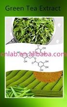 100% Natural Organic 50%-98% EGCG Green Tea Extract Powder,Green Tea Powder,Green Tea Extract