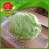organic fresh vegetable iceberg lettuce green vegetables
