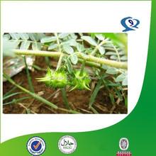 tribulus terrestris plant extract,saponin,furostanolic saponins