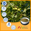 ISO&GMP facotory Horse Chestnut extract powder(20-90% Escin)