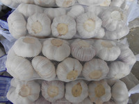Fresh garlic packed in nets for wholesale-Global Gap quality