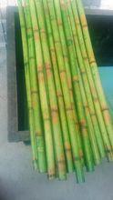 Décoratif bambou