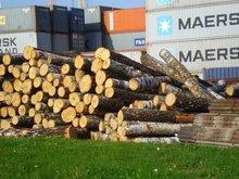 Birch Round Logs