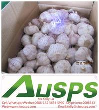 china garlic price per ton