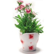 Innovative mini doll planter Anti Radiation seed box , 3d phone stickers