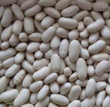 White Kidney Beans,White Beans,Factory ,Baishake Type