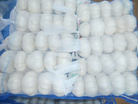 2014 Crop China Shandong Province fresh normal white garlic