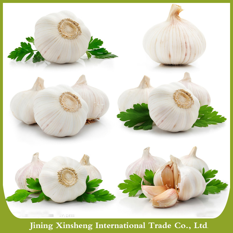 Spice alho puros fabricantes de alho brancos frescos